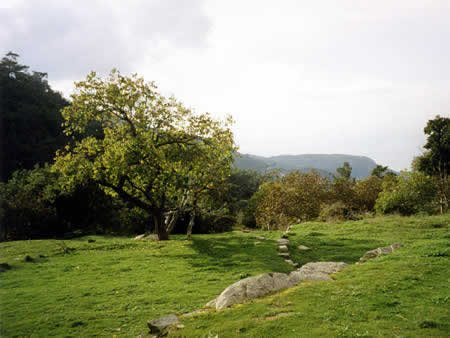 open landscape of meadows and woods